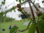 Outpost Garden1_Sean_Meenan