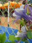 Outpost_Garden2_Sean_Meenan