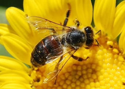 bumblebee-habana-outpost