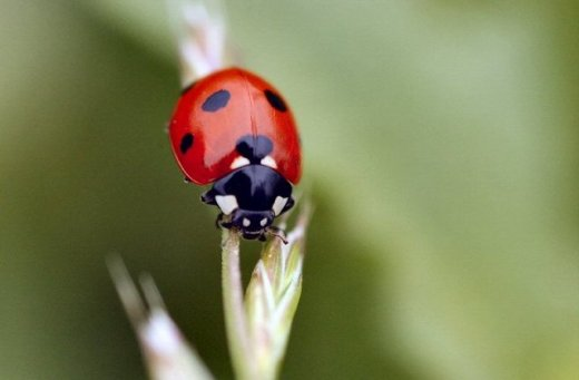 ladybug-habana-outpost
