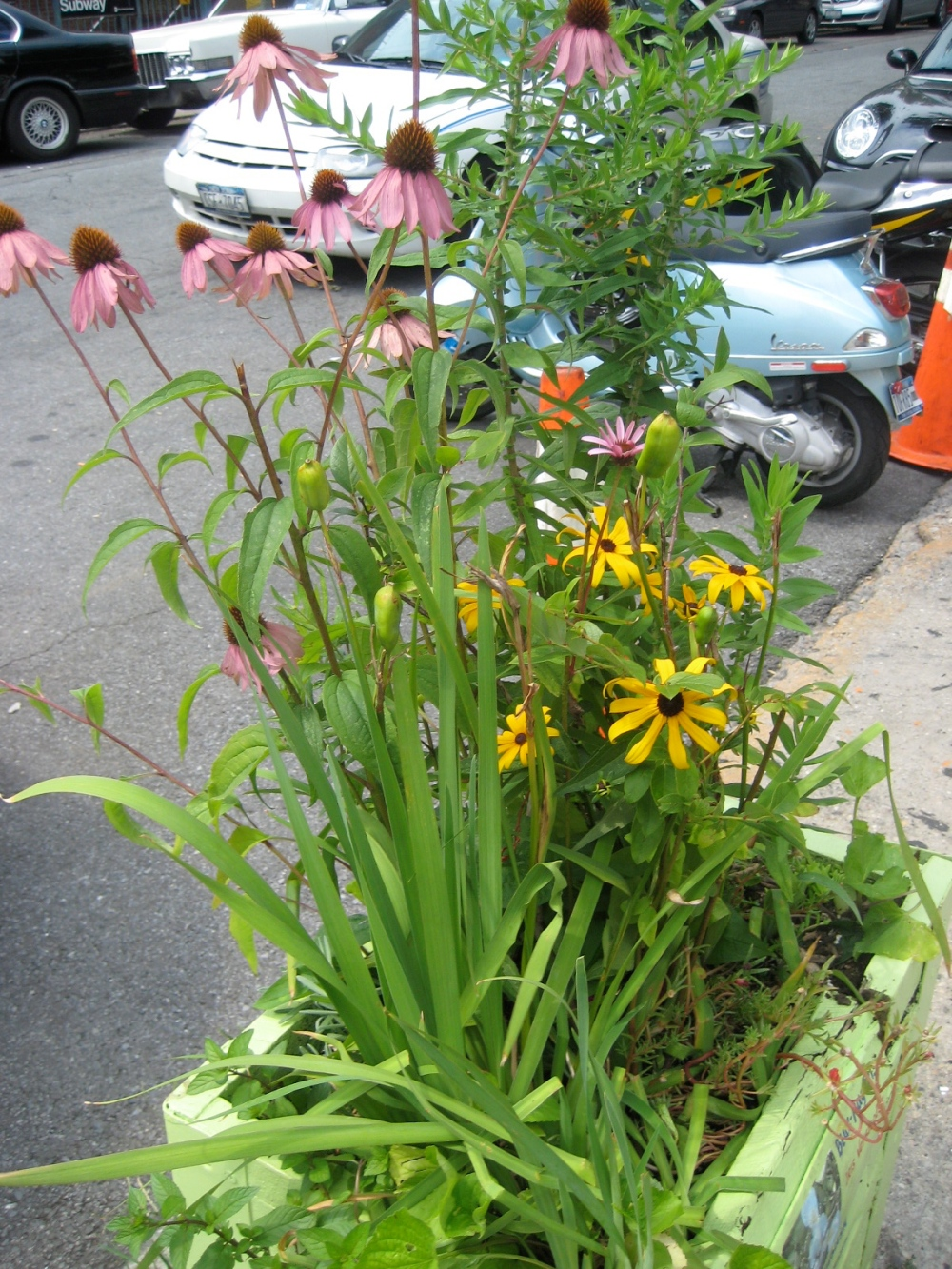 Native PLants at Habana Outpost